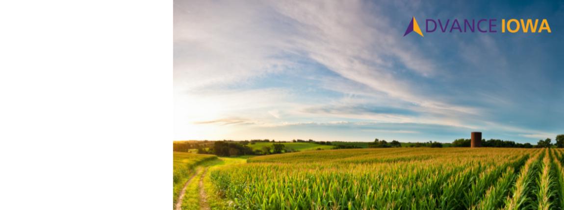 Corn field with Advance Iowa logo